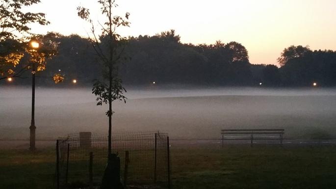 Foggy Park1