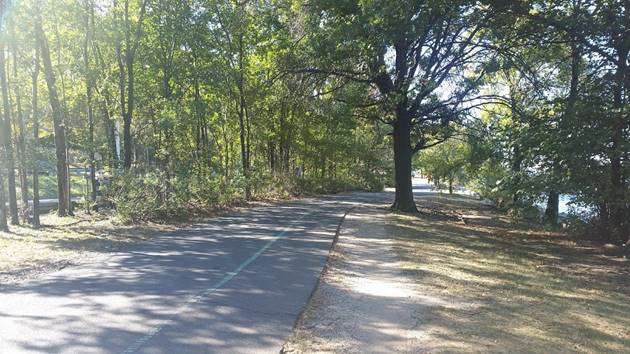 hudson greenway trees.jpg