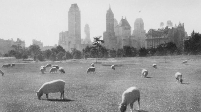 sheep meadow historical